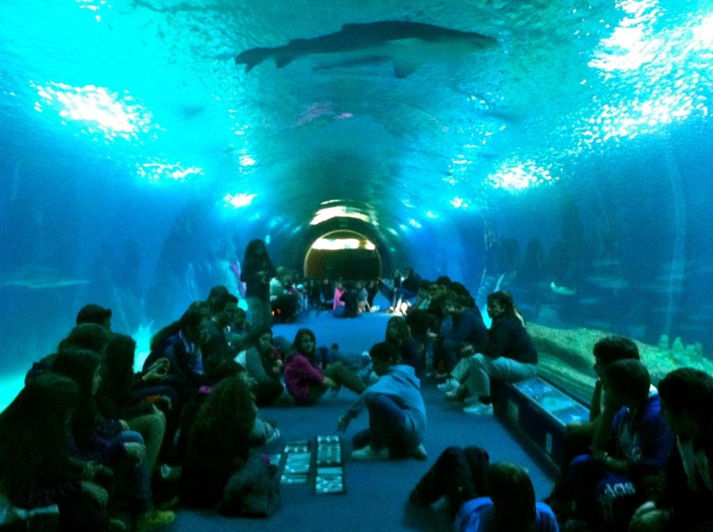 Dormir con tiburones en val ncia oceanario en espa a for Oceanografic telefono